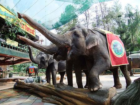 Obyek Wisata » Jakarta - Bogor » Taman Safari Cisarua Bogor • www